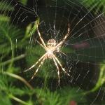 Araignée et superstition dans ARAIGNEE araignee