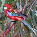 photos gratuites Photos gratuites de perroquets. Photos d'oiseaux, de perruches.