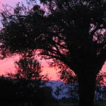 sunset-tree2