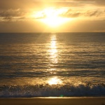 photos gratuites Photos gratuites de couchers et de levers de soleil en été. Photos de paysages de plages, d'océan. Photos libres de droit d'arbres, de parcs forestiers, de végétation, forêts alpines.