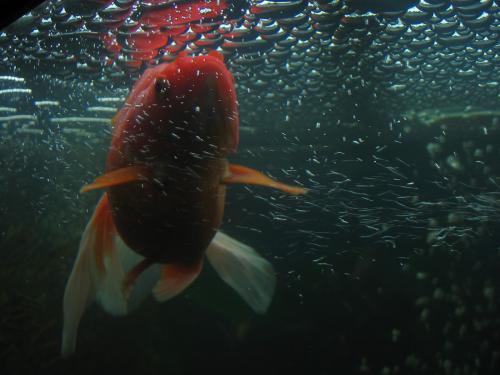 è carino anche lui ☻ dans underwater