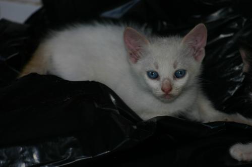 Gato, Gatos