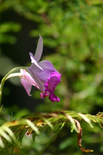 Orchidée, Orchidées